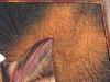 sacred-datura-detail-5